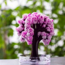 Magic Sakura Home Decor Magic Sakura Tree 13 cm